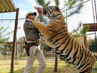 A still of Joe Exotic feeding a tiger in Tiger King